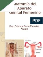 Anatomia Del Aparato Femenino