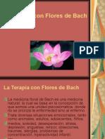 665 Flores de Bachpower Point.