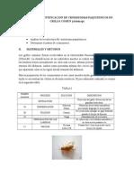 Obtencion e Identificacion de Cromosomas Paquitenicos en Grillo Comun