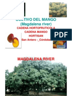 cultivo Mango Puerco o Hilaza Magdalena River (1)