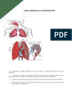 Fiziologia Aparatului Respirator