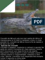 www.power-point.ro_852_CROCODILI de  Nil.pps
