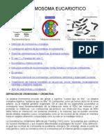 El Cromosoma Eucariotico