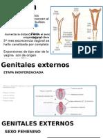 embrio-reproductor-femenino