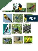 Aves de Venezuela CON FOTOSSS