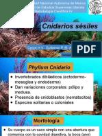 Cnidarios sésiles UNAM