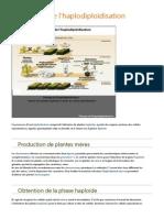 l'haplodiploïdisation.pdf
