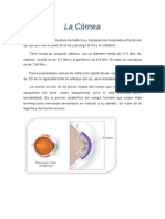 La Cornea.doc