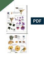 134052143-Modele-Pictura-Curs.pdf