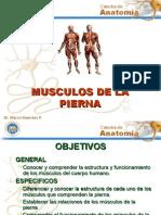 Musculos de La Pierna