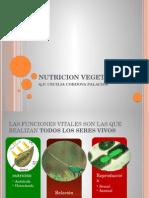 4 Nutricion Vegetal