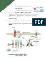 Cuáles son las hormonas que se secretan en el páncreas.docx