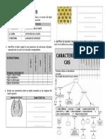 actividadesdetejidosvegetales-120405195533-phpapp01.docx