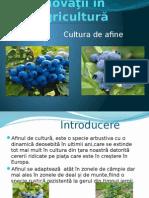 Proiect Cultura Afine (1).pptx