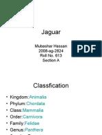 613. Jaguar
