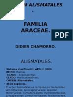 Orden Alismatales