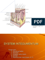 System Integumentum