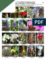 300_Caatinga_Plants-b1_1.pdf
