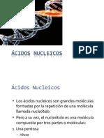 5. ácidosnucléicos