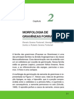 MORFOLOGIA DE GRAMÍNEAS FORRAGEIRAS