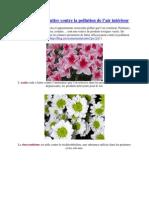 INF2009 15 plantes pour lutter contre la pollution _liste commentée