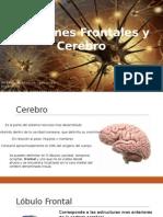 Funciones Frontales y Cerebro