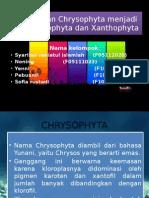 Chrysophyta-Sipp.pptx