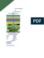 Frog (Biology)