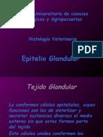 7a Epitelio Glandular Exposicion Prof.