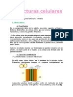 informe estructuracelular