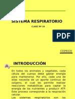 Ptt Sistema Respiratorio
