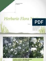 Herbario Flora Nativa Chile