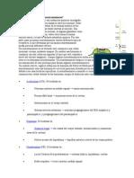 Preguntas 1 y 2 Seminario Neurotransmisores