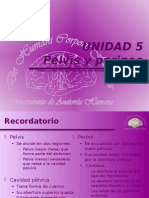 PELVIS Y PERINEO