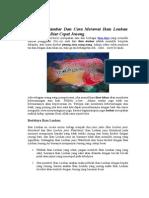 Budidaya Gambar Dan Cara Merawat Ikan Louhan Yang Benar Biar Cepat Jenong