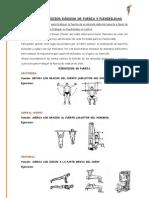 Guía de Ejercicios de Fuerza y Flexibilidad