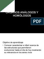 Organos Analogos y Homologoo