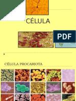 Clase Célula