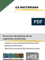 GENETICA BACTERIANA.ppt