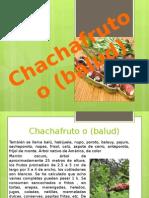 Chachafruto o (Balud)