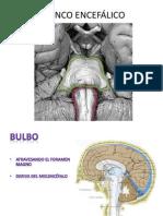 2 TRONCO ENCEFÁLICO nervios craneales.pdf