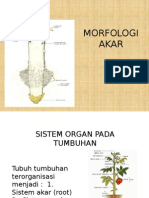 Morfologi Akar