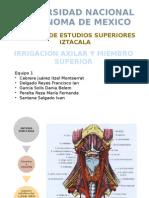 Irrigacion Axilar y Miembro Superior (2)