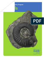 fossils fin hr