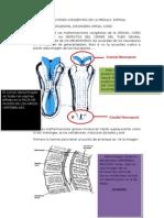 Malformaciones Congenitas de La Medula Espinal