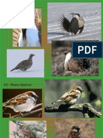 bird id ppt 41 50 only