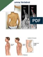 2 Columna Vertebral y Cuello