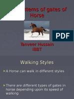 Horse Gaits by Qaisar
