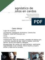 Diagnóstico de Parásitos en Cerdos