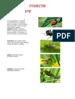 Insecte folositoare.docx